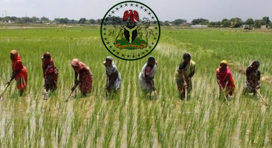 Federal Government To Boost Agribusiness Wth 80km Access Road for Construction In Kano and Jigawa